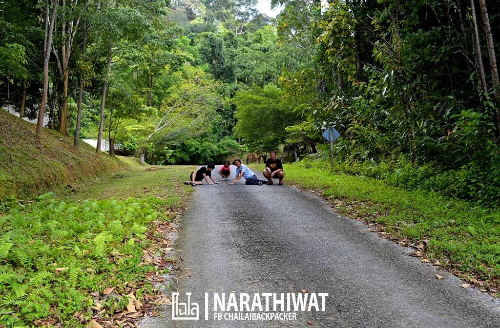 narathiwat-chailaibackpacker-146
