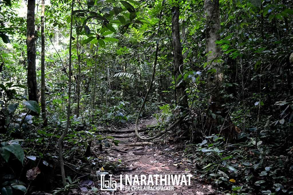 narathiwat-chailaibackpacker-151