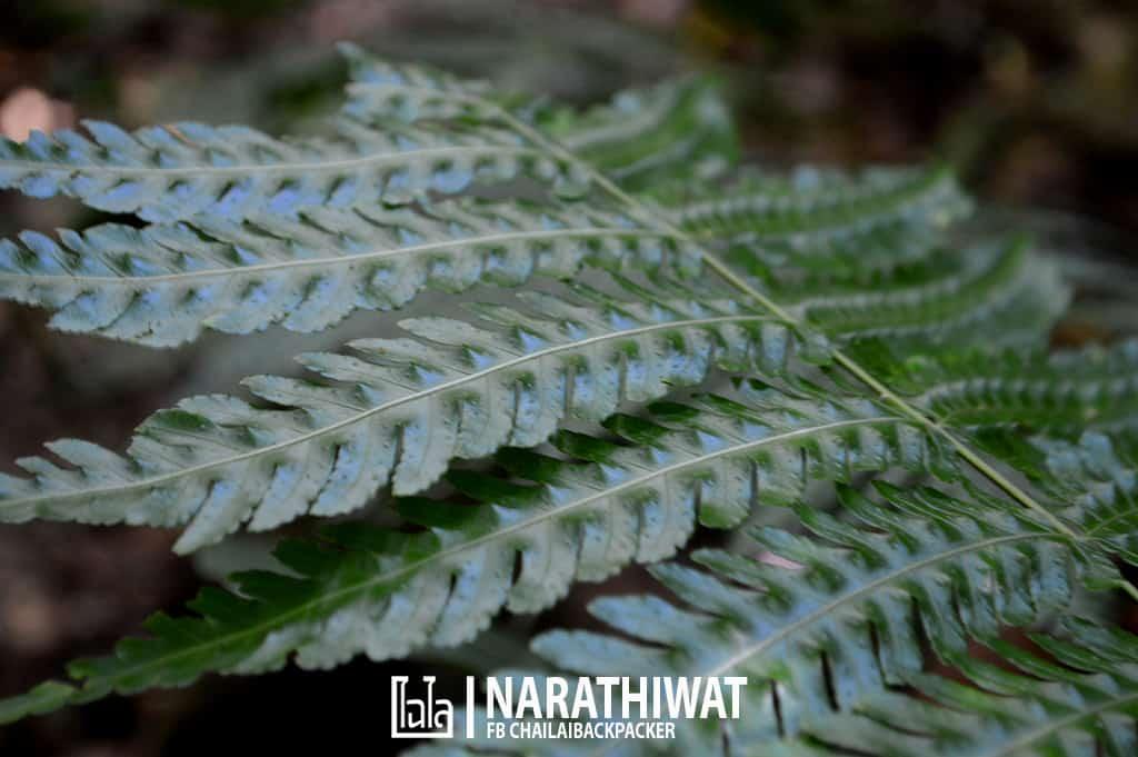 narathiwat-chailaibackpacker-159