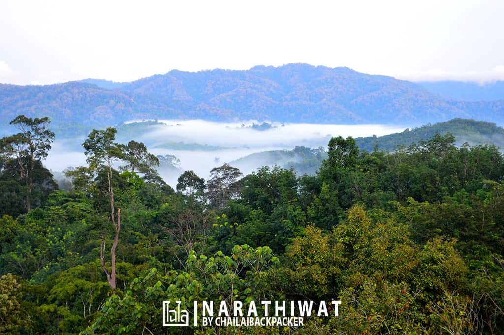 narathiwat-chailaibackpacker-189