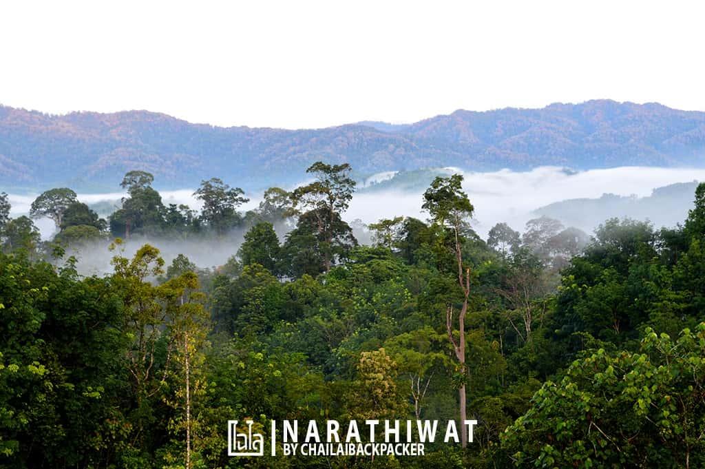 narathiwat-chailaibackpacker-192