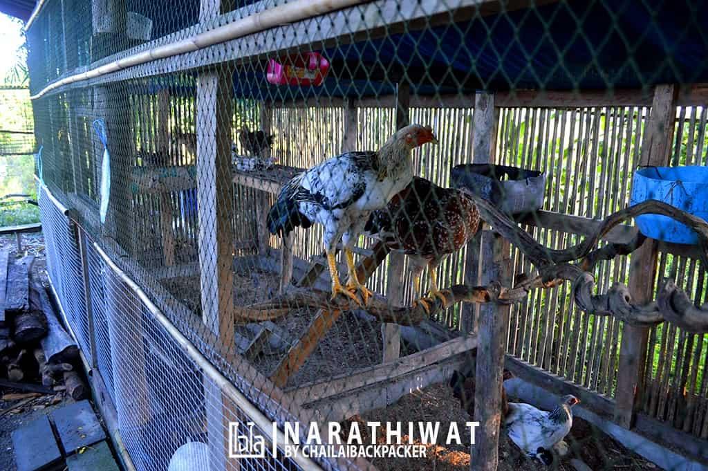 narathiwat-chailaibackpacker-87