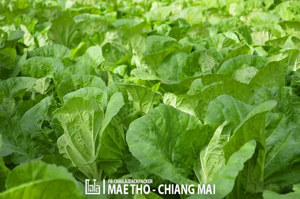 mae-tho-101