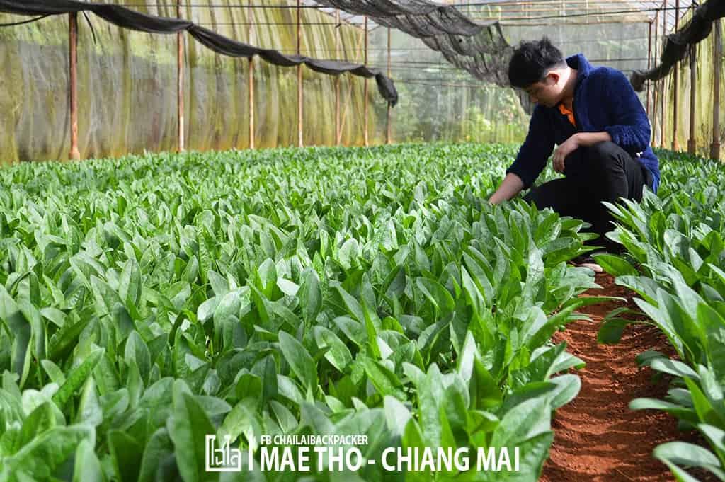 mae-tho-103