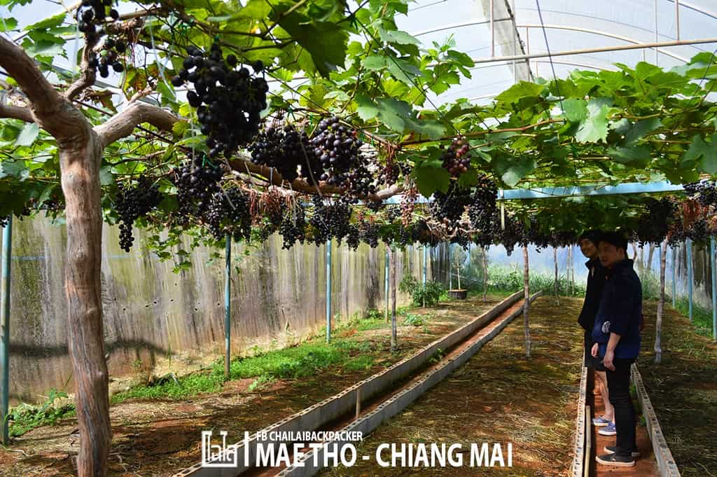 mae-tho-109