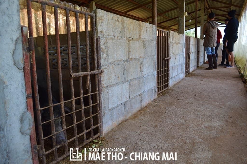 mae-tho-114