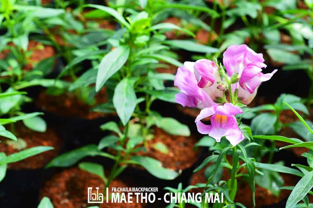 mae-tho-128