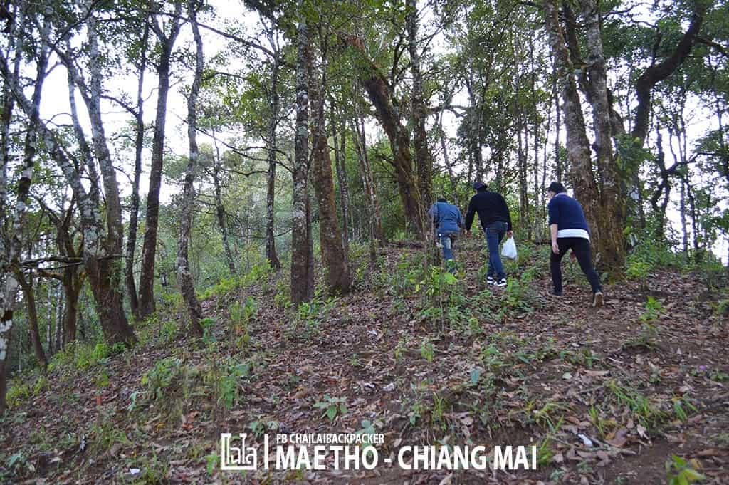 mae-tho-160