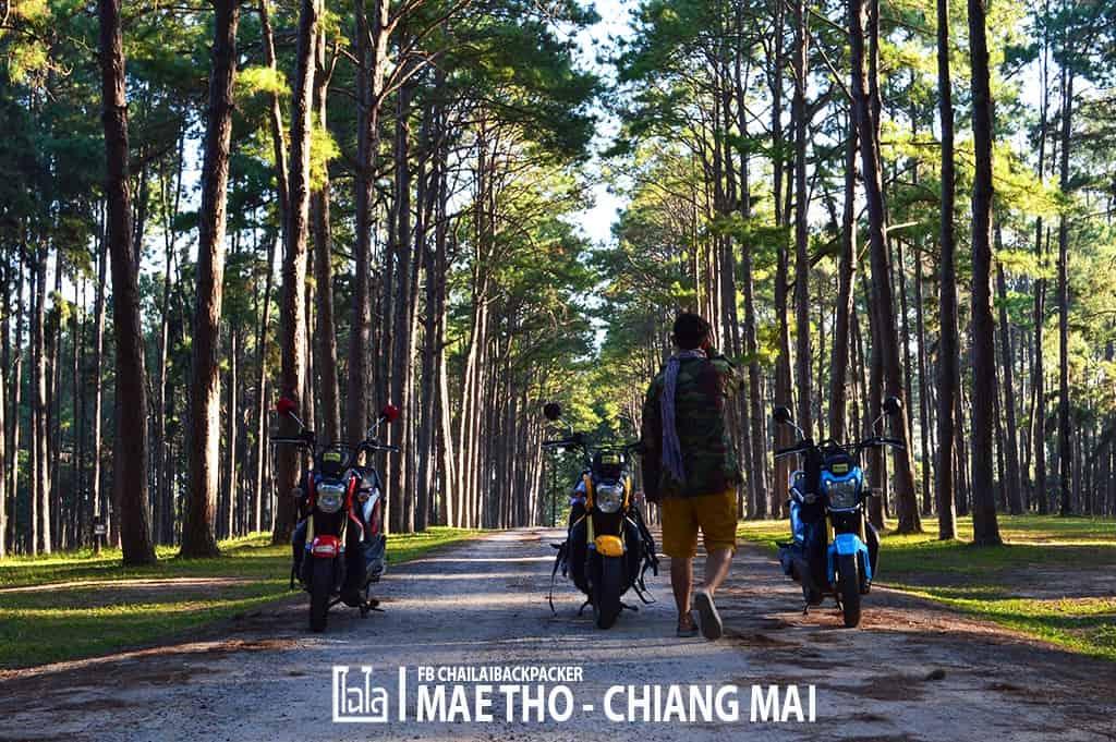 mae-tho-22