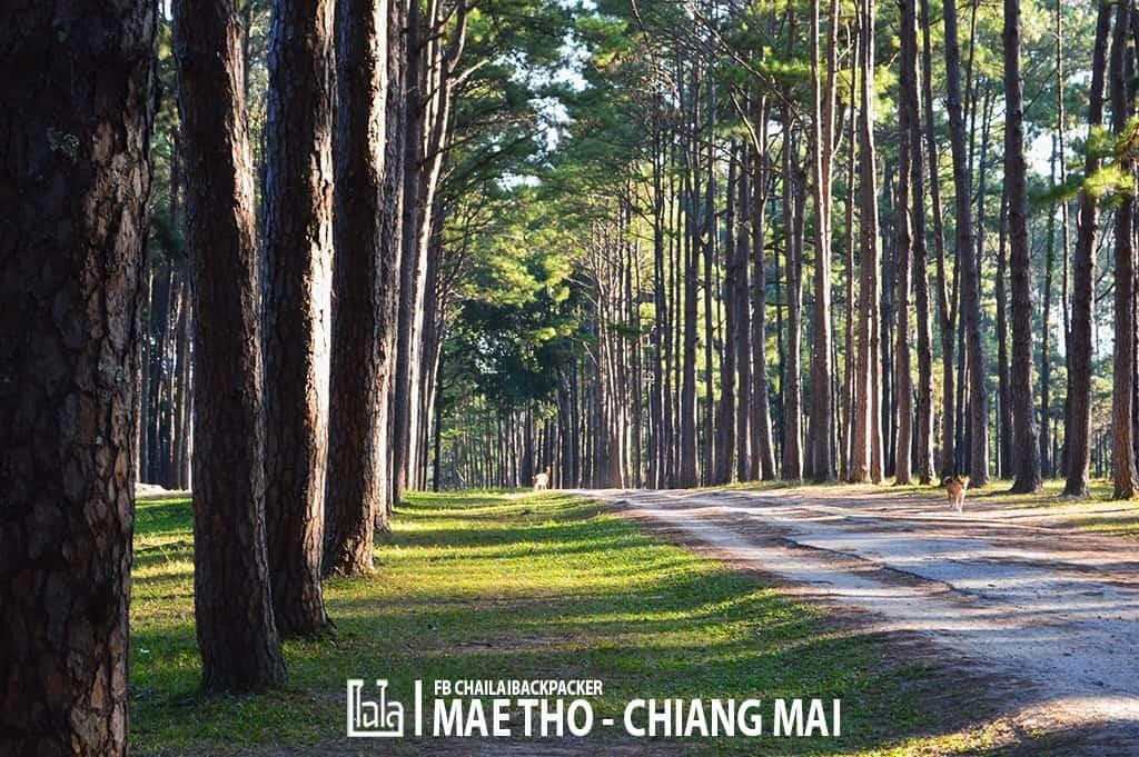 mae-tho-23