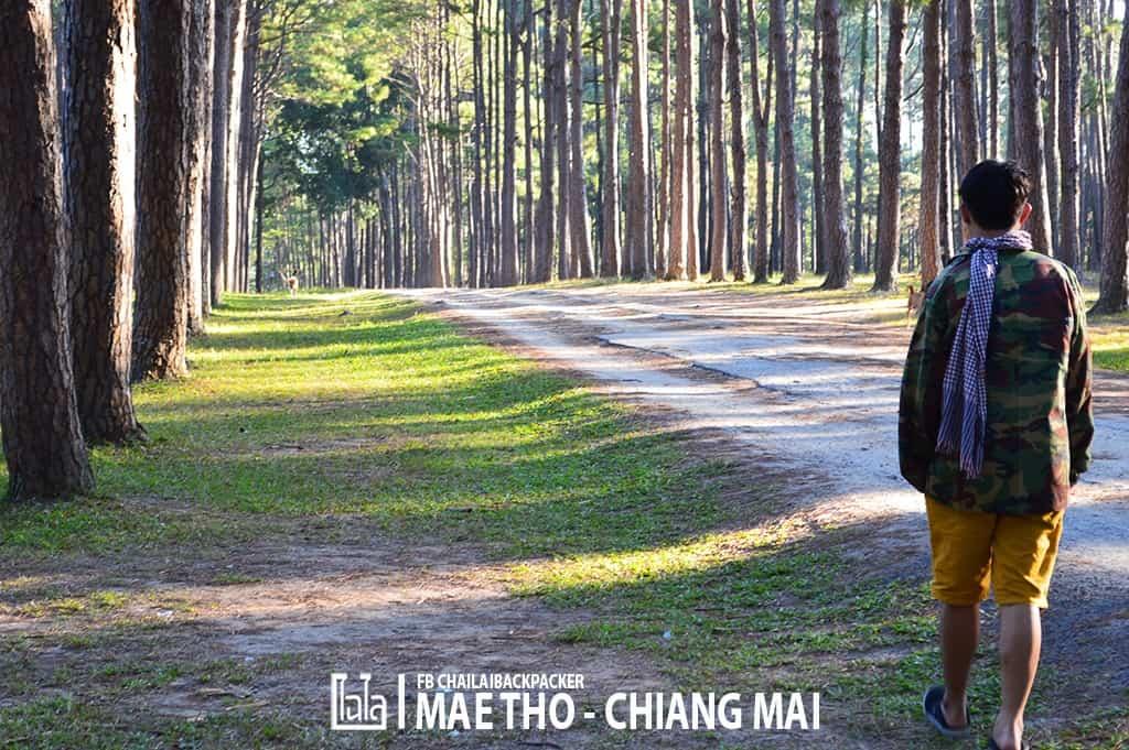mae-tho-24