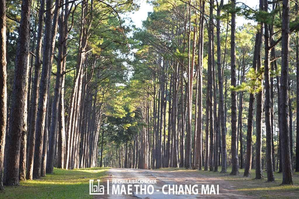mae-tho-26