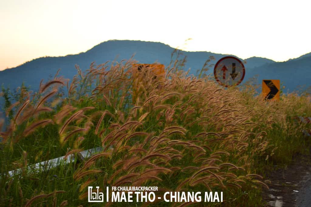 mae-tho-33