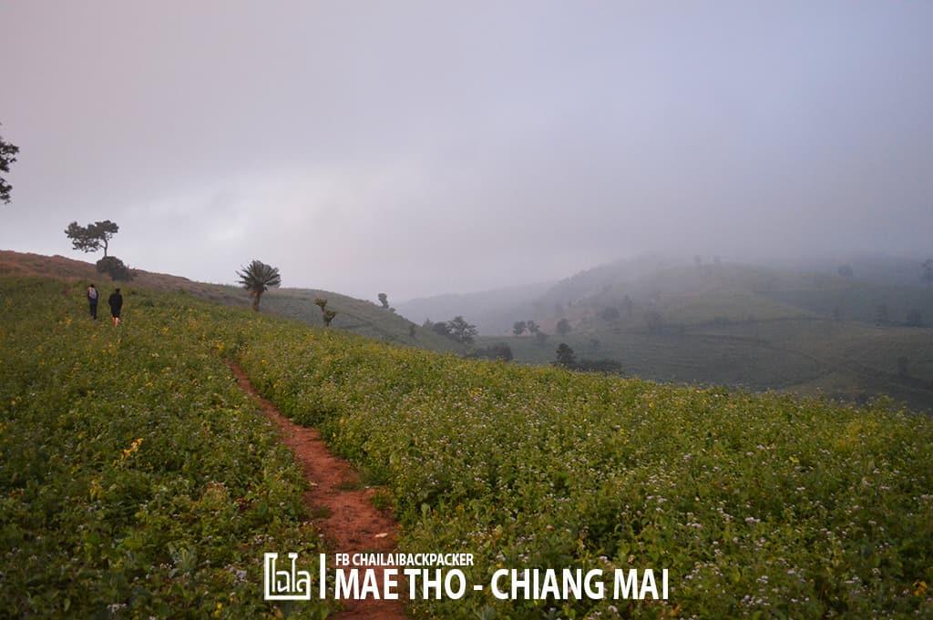 mae-tho-49