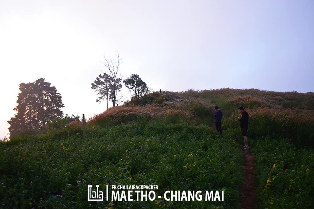 mae-tho-50