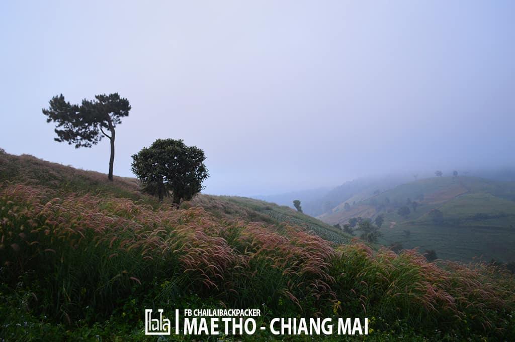 mae-tho-51