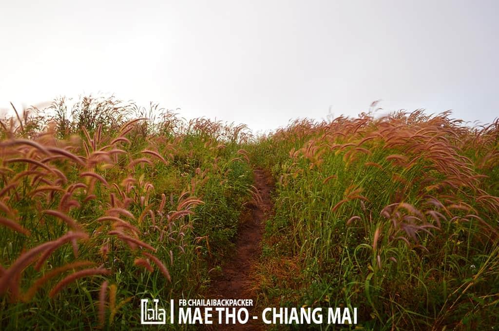 mae-tho-54