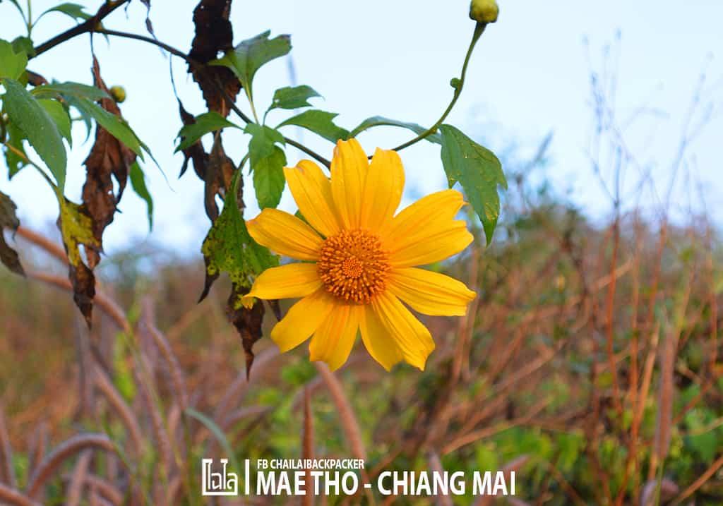 mae-tho-61