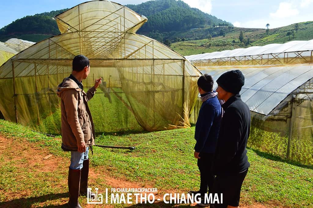 mae-tho-88