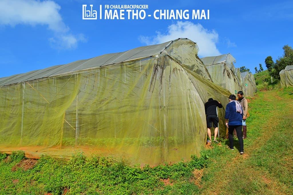 mae-tho-89