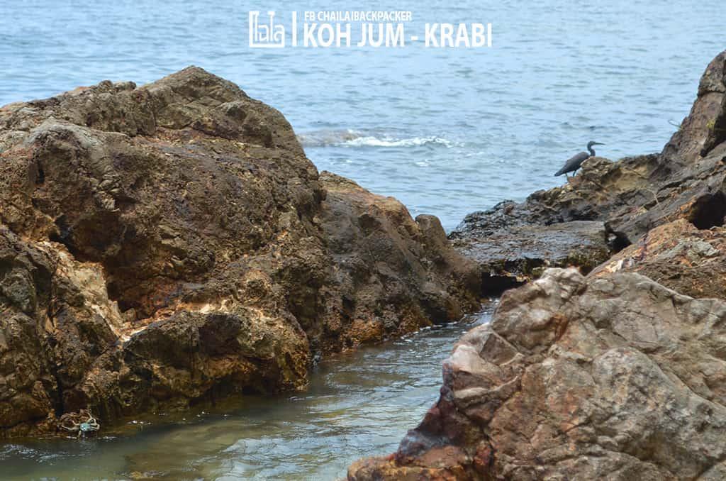 Koh Jum (61)