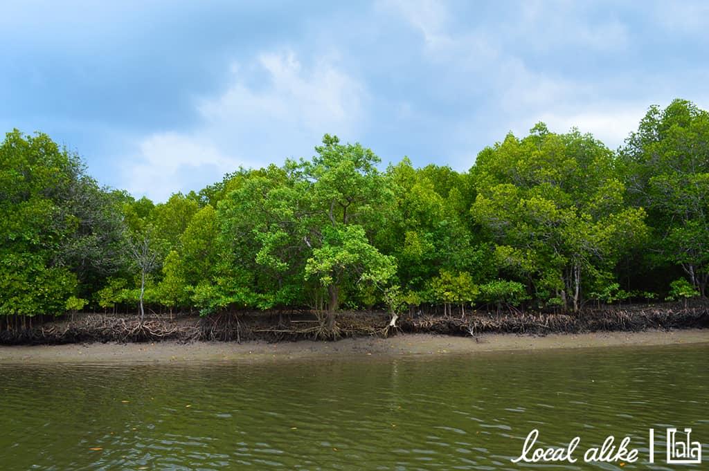 Local Ailke - Krabi (123)