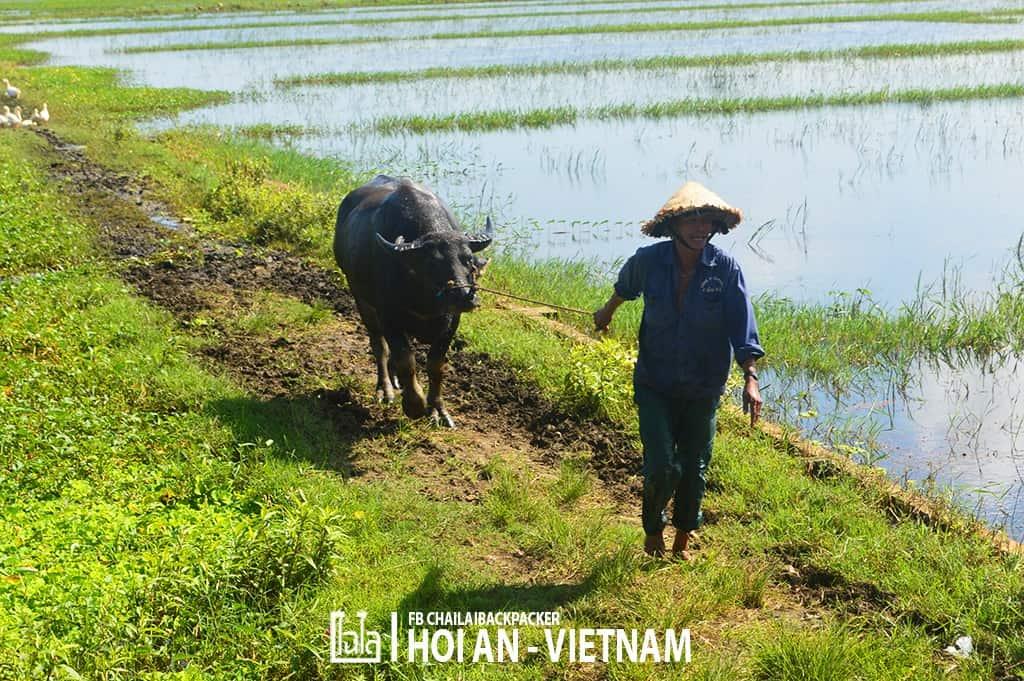 Hoi An - Vietnam (358)