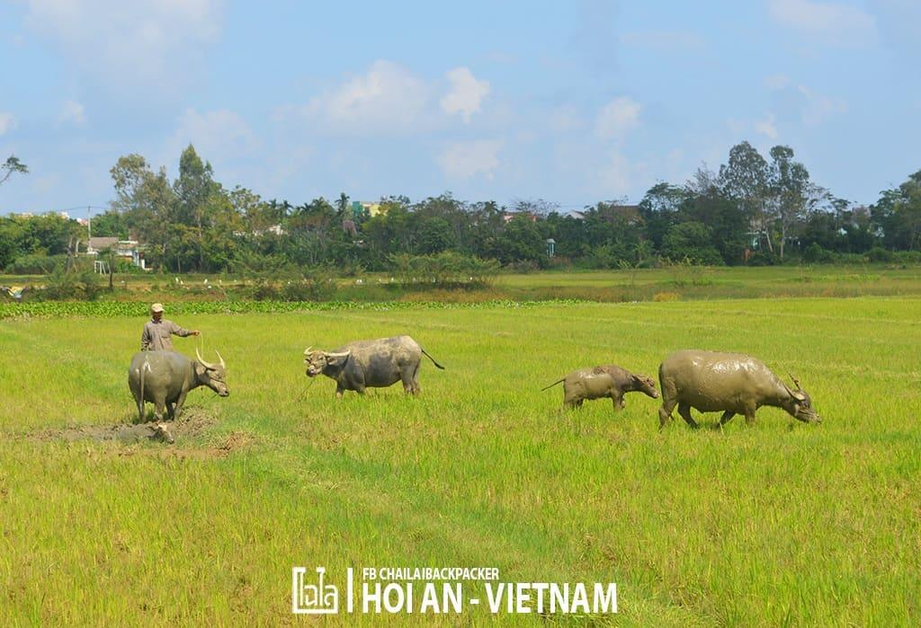 Hoi An - Vietnam (403)