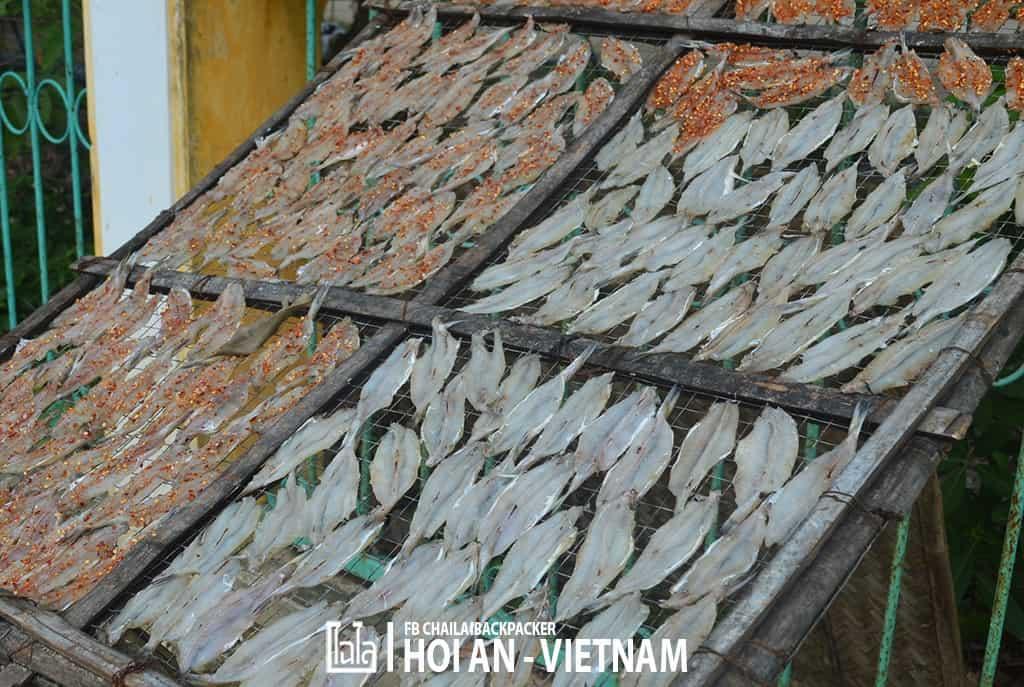 Hoi An - Vietnam (409)