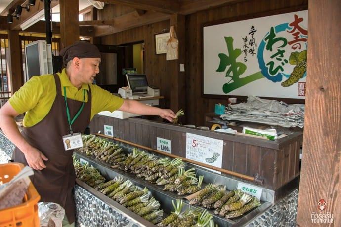 ไร่วาซาบิ-ร้านขายต้นวาซาบิ-ทัวร์ญี่ปุ่น