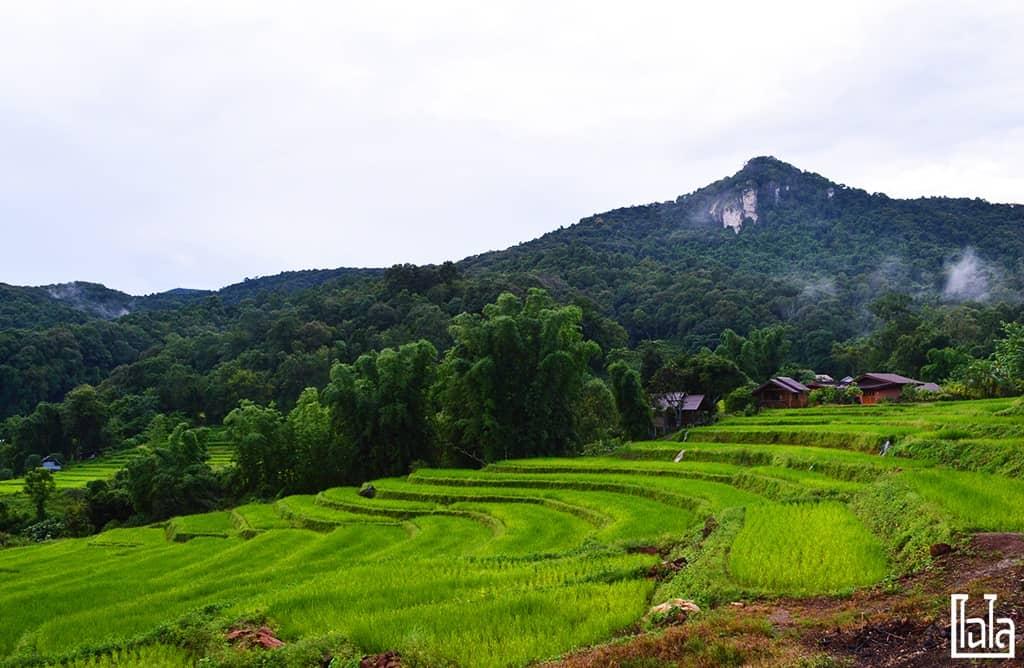 Chiang Mai - นาขั้นบันได (10)