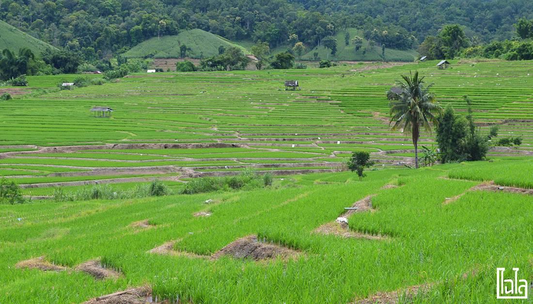 Chiang Mai - นาขั้นบันได (13)