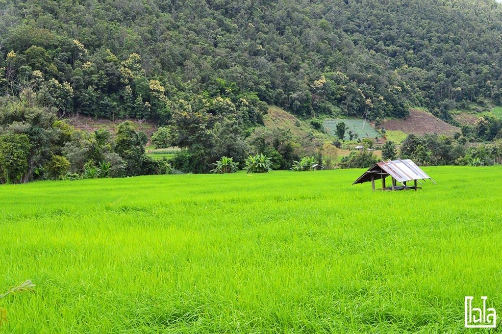 Chiang Mai - นาขั้นบันได (17)