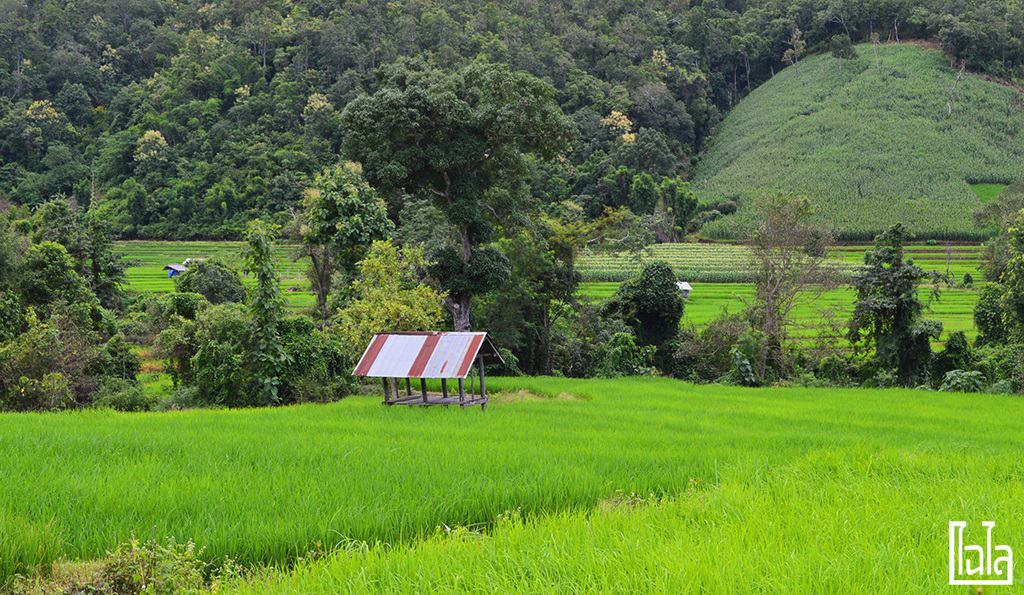 Chiang Mai - นาขั้นบันได (18)