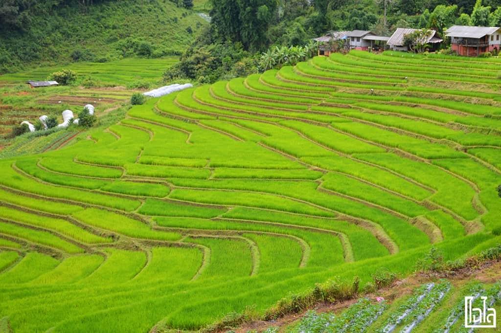 Chiang Mai - นาขั้นบันได (2)