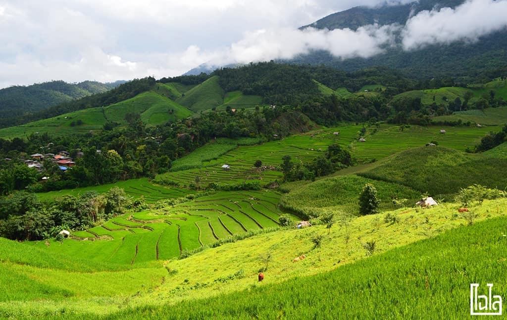 Chiang Mai - นาขั้นบันได (20)