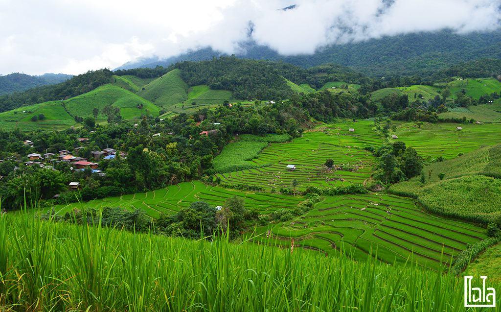 Chiang Mai - นาขั้นบันได (22)