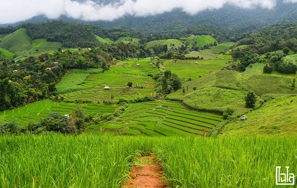 Chiang Mai - นาขั้นบันได (24)