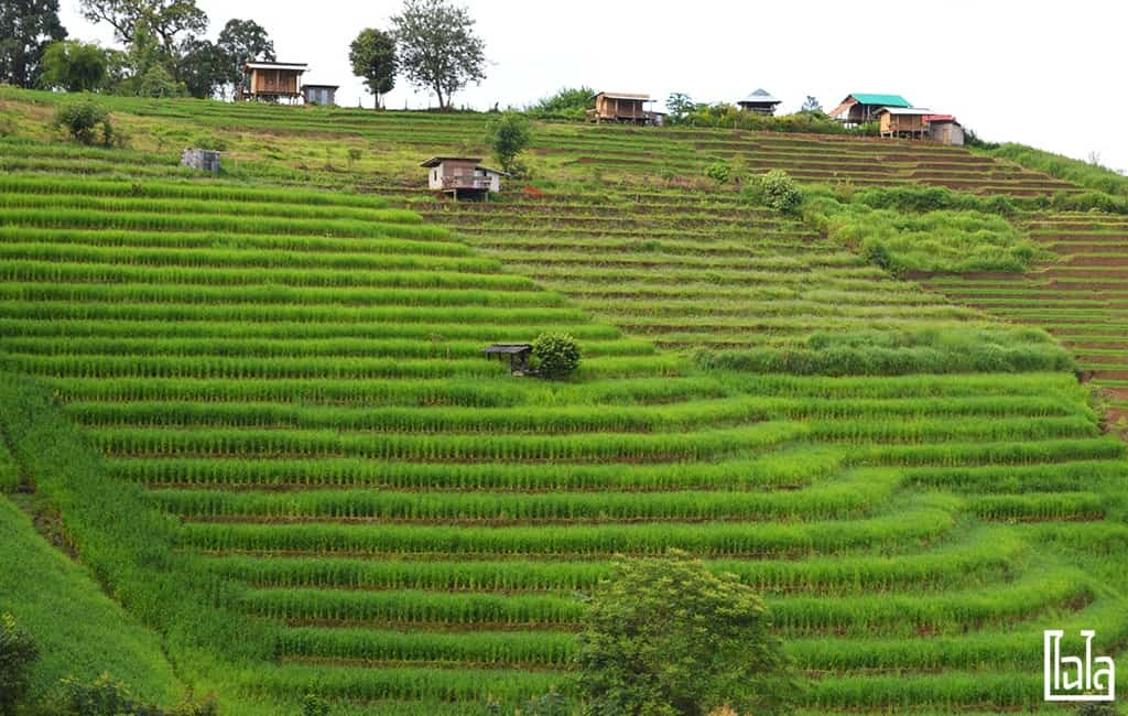 Chiang Mai - นาขั้นบันได (33)