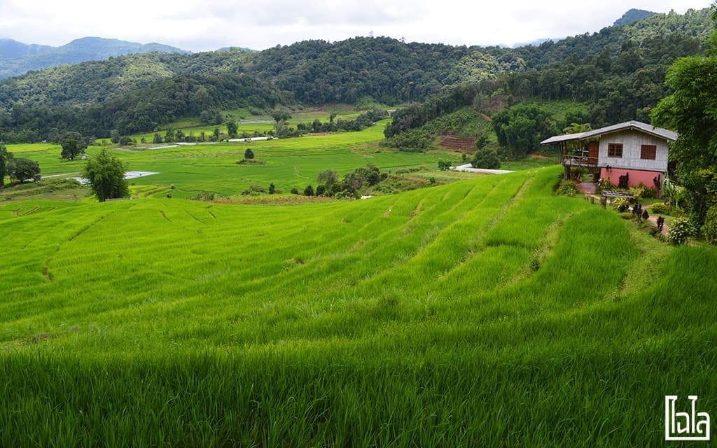 Chiang Mai - นาขั้นบันได (4)