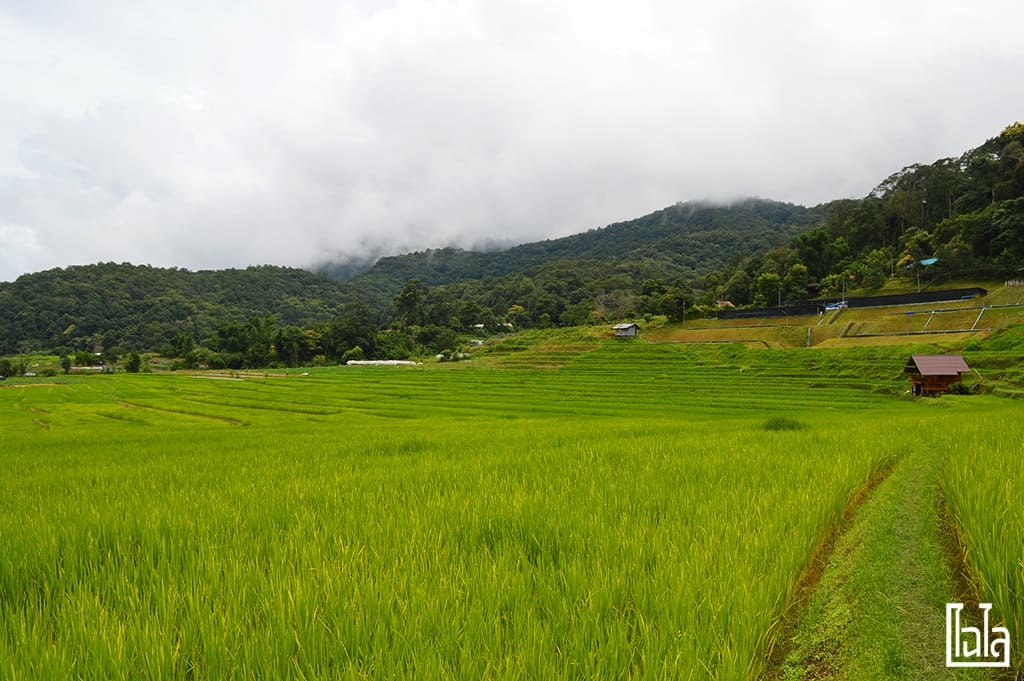 Chiang Mai - นาขั้นบันได (8)