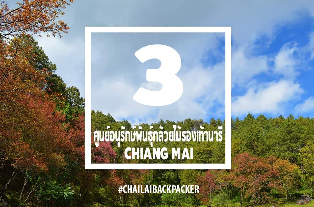 Chiang Mai Pink (10)