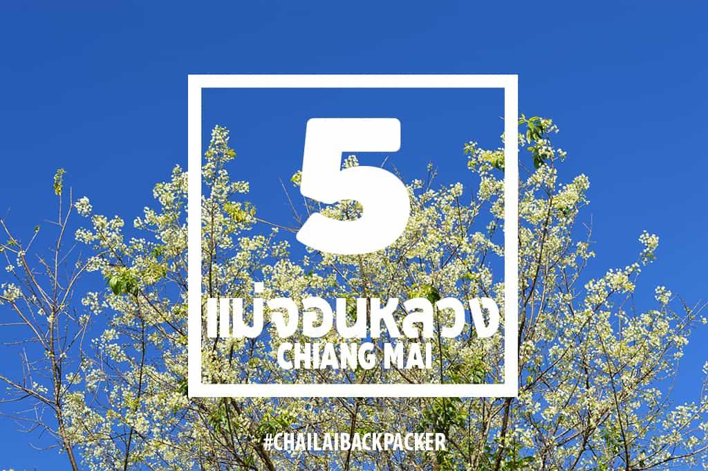 Chiang Mai Pink (19)