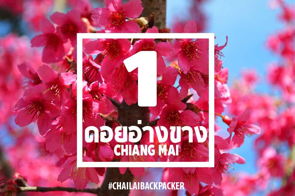 Chiang Mai Pink (2)