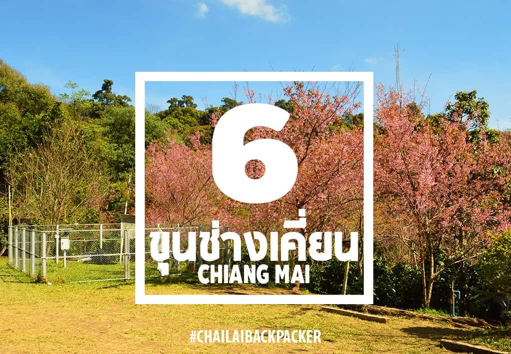 Chiang Mai Pink (22)