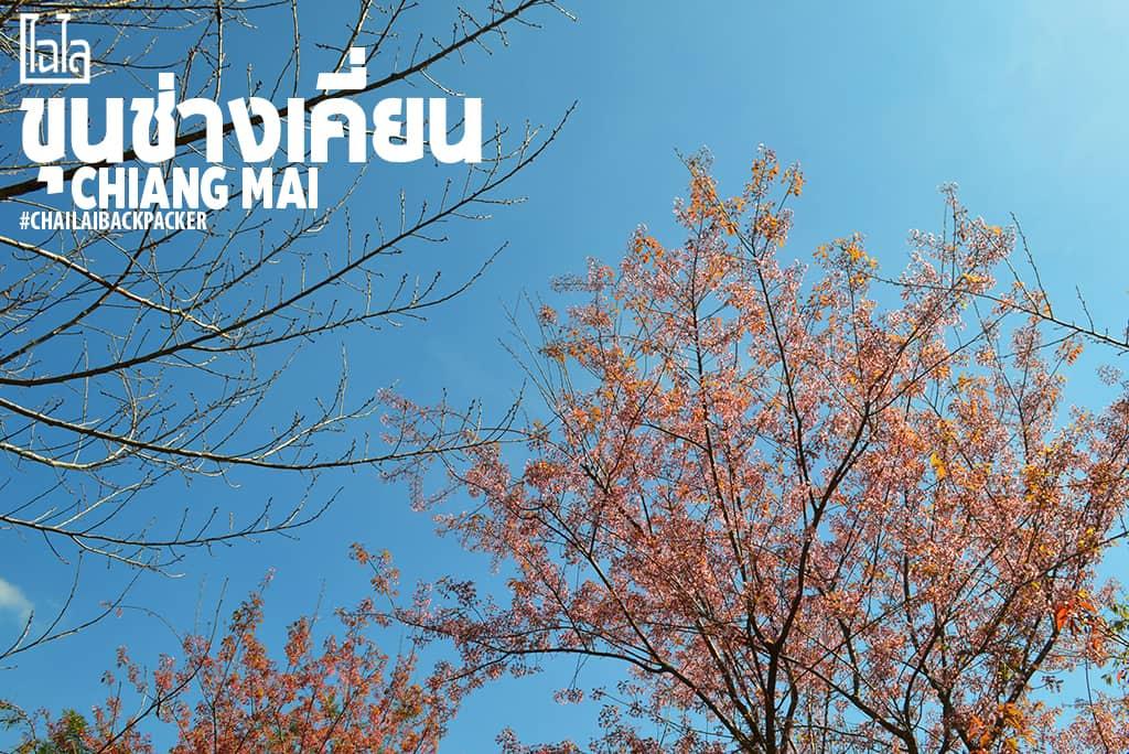Chiang Mai Pink (23)