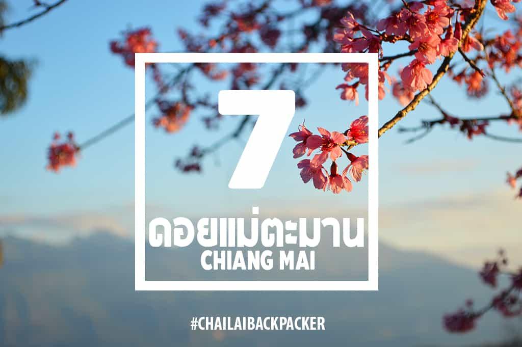 Chiang Mai Pink (27)