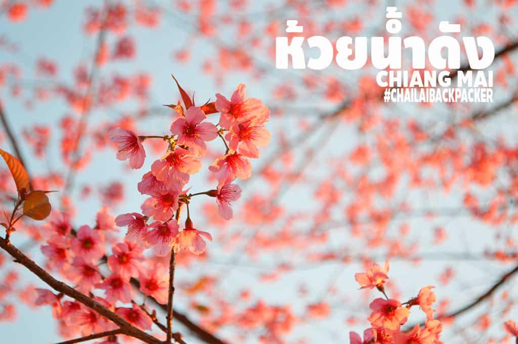Chiang Mai Pink (31)