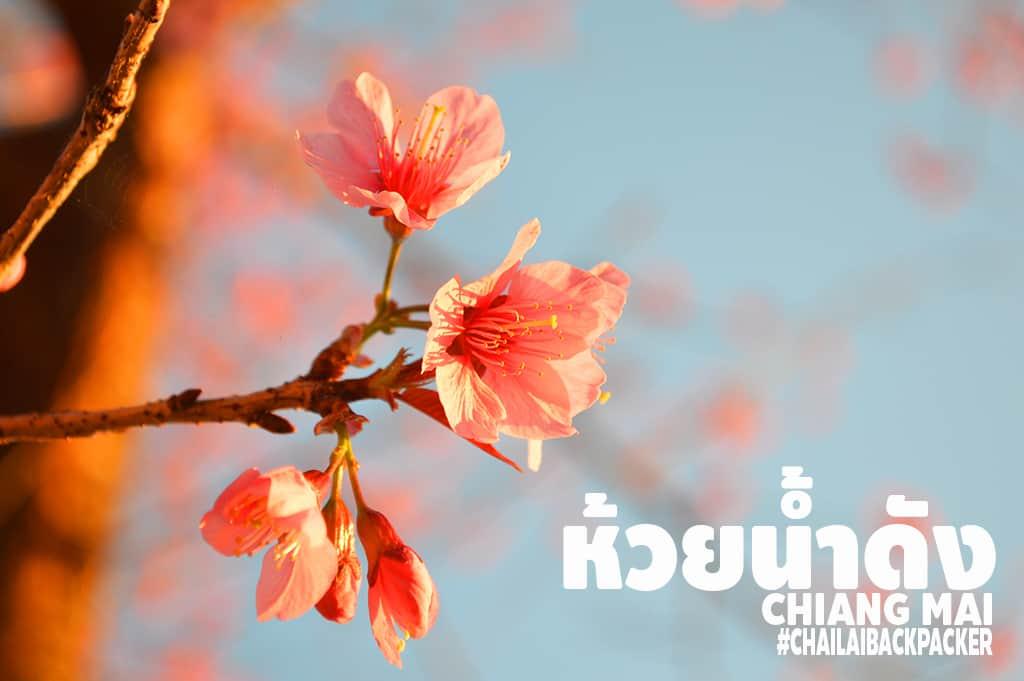 Chiang Mai Pink (32)