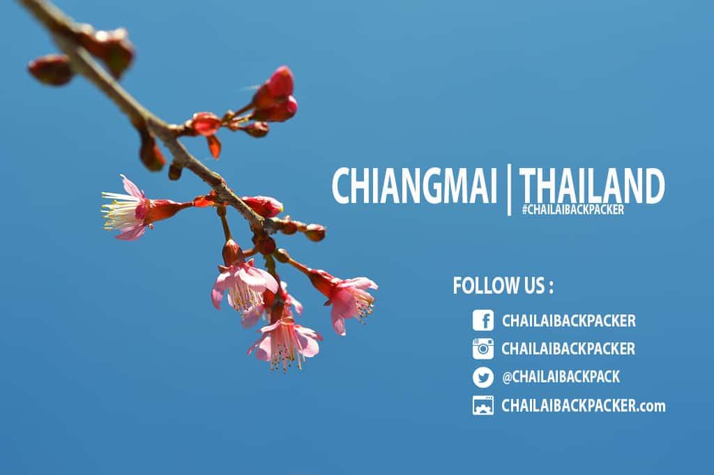 Chiang Mai Pink (33)